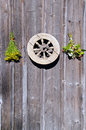 Tutsan and raspberry bunches and wheel on wall Stock Image