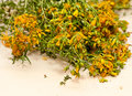 Tutsan saint john s wort flowers medicinal herbs Royalty Free Stock Photography