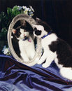 Tuxedo cat looking in Mirror Royalty Free Stock Images