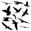 Twelve birds silhouette Royalty Free Stock Photo