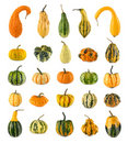 Twenty-five different ornamental pumpkins