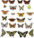 Twenty four different butterflies Stock Photos