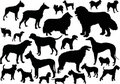 Twenty four dog silhouettes Stock Photography