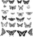Twenty four grey butterflies Royalty Free Stock Photo