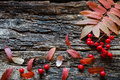 Twig and berries of rowan with autumn leaves Royalty Free Stock Photo