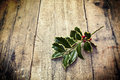 Twig of holly tree lying on old wooden floor Stock Image