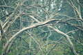 Twig photo of white tree branches Royalty Free Stock Photos