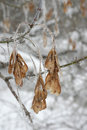 Twig of tree hoar frost covered shallow dof Stock Photography