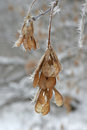 Twig of tree hoar frost covered shallow dof Royalty Free Stock Images