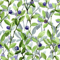 Twigs blueberry. watercolor seamless pattern