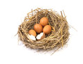 Twigs nest with brown chicken eggs with broken and empty shell e Royalty Free Stock Photo
