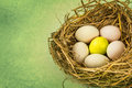 Twigs nest with white egg and one of different or unique Royalty Free Stock Photo