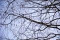 Twigs Royalty Free Stock Photo