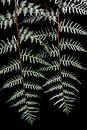 Twin fern leaves Stock Photos