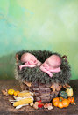 Twins in a basket autumn with halloween pumpkins and two adorable newborn twin babies Royalty Free Stock Photos