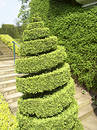 Twirl topiary Royalty Free Stock Photo