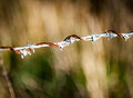Twisted strand of barbed wire Royalty Free Stock Photo