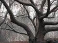 Twisted tree Royalty Free Stock Photos