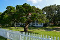 Twisted tree old surrounded by white picket fence Stock Photo