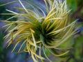 Twisty Plant Royalty Free Stock Photo