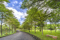 Twisty roads in the park Royalty Free Stock Photo