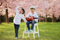 Two adorable caucasian boys in a blooming cherry tree garden, pl Royalty Free Stock Photo