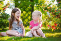 Two adorable little sisters picking red currants Royalty Free Stock Photo