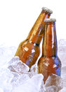 Two alcohol brown glass beer bottles on white moist are isolated a background with ice cubes around them for a party or bar Royalty Free Stock Image