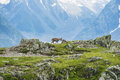 Two alpine goats on the edge of the mountain, mount Bianco, Alps, Italy Royalty Free Stock Photo