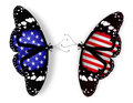 Two american flag butterflies Royalty Free Stock Image