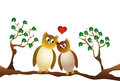 Two amorous owl sitting on a branch, white background