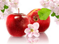 Two apples image of and blossom on a white background Stock Images