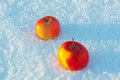 Two apples in the snow winter Stock Photos