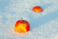 Two apples in the snow winter Royalty Free Stock Photo