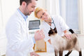 Two Attractives Veterinary Sur...