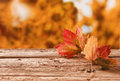 Two autumn leaves on a rustic table outdoors Royalty Free Stock Photo