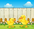 Two baby ducks inside the fence illustration of Royalty Free Stock Photos