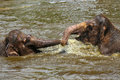 Two baby elephants playing with each other in the water in a zoo