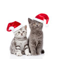Two Baby Kittens In Red Santa ...