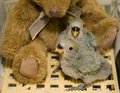 Two baby meyer parrots tub teddy bear feathers just beginning to come Royalty Free Stock Images