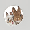 Two baby rabbits Royalty Free Stock Photo