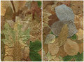 Two backgrounds of dry leaf Royalty Free Stock Photo