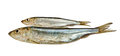 Two Baltic herrings. Royalty Free Stock Photos