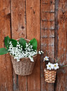 Two baskets of lilies and daffodils Royalty Free Stock Photo
