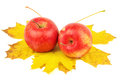 Two beautiful apples on autumn maple leafs isolated white background Royalty Free Stock Photography
