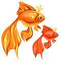 Two beautiful goldfish with magic crowns Royalty Free Stock Photo