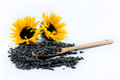 Two beautiful sunflowers and black seeds with a wooden spoon Royalty Free Stock Photo