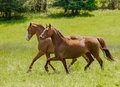 Two Beauty's out for a Spring Trot Royalty Free Stock Photo