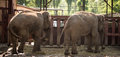 Two big elephant in a park in the nature Royalty Free Stock Photo