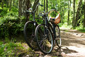Two bikes in forest Stock Photography